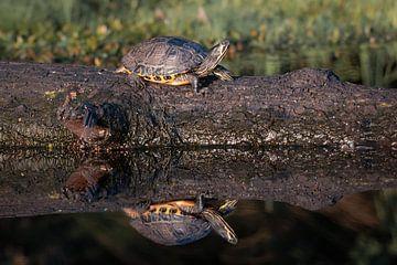 Schildkröte im Mastbos Breda, Landschaft von Andre Gerbens