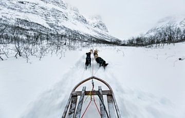 Hundeschlitten in Tromsø, Norwegen von Sebastian Rollé - travel, nature & landscape photography