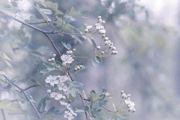 witte bloesem van Tania Perneel