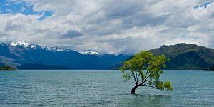 The lonely tree of Wanaka - Panorama - Nieuw Zeeland