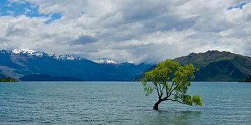 The lonely tree of Wanaka - Panorama - Nieuw Zeeland van Ricardo Bouman