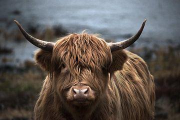 Schotse hooglander portret van bart dirksen