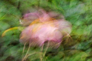 Japanische Anemone von Irene Damminga