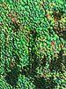 Urban Painting 138 aka Flowers van MoArt (Maurice Heuts) thumbnail
