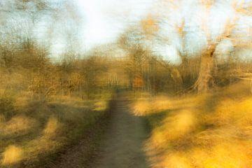 Herbstliche Landschaft von Mandy Metz