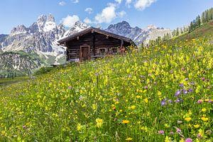 Bloemenwei in de bergen