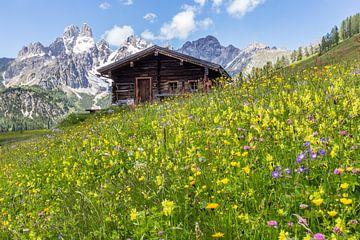 Mountain hut in flowering pasture sur Coen Weesjes