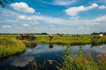 Niederländische Landschaften von Brian Morgan