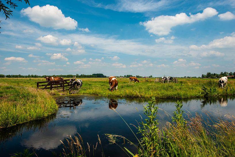 Hollandse Landschappen van Brian Morgan