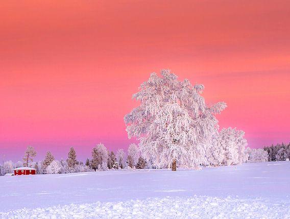 Een zonsondergang na een koude winterdag in Zweden