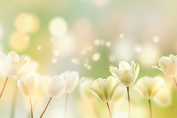 witte tulpen van Dörte Stiller