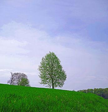 Boom in de zomer landschap van Wolf-Dieter Werner