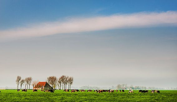 Friesland grasland van Harrie Muis
