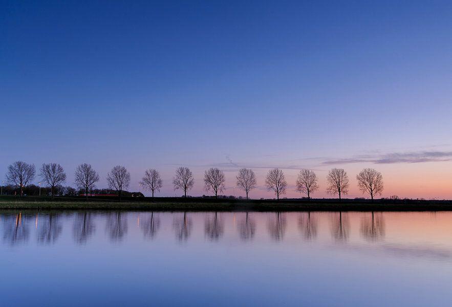 bomenrij weerspiegeld in het water