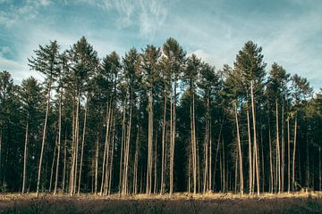 Bäume in einer Reihe von Douwe Schermer