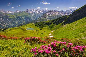 Blooming mountain rose van