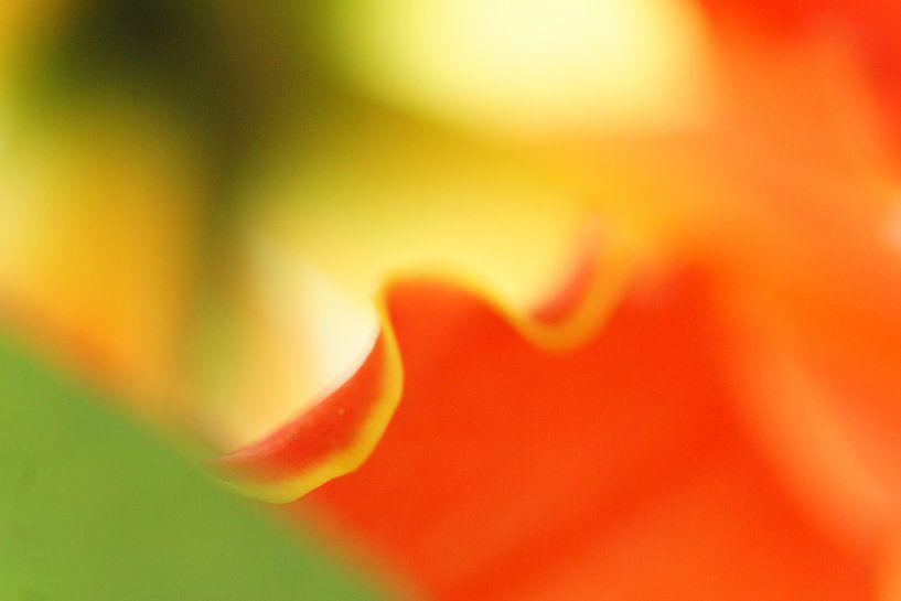 Orchids (I) van Carla Mesken-Dijkhoff