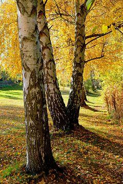 Herfstmagie van Ostsee Bilder