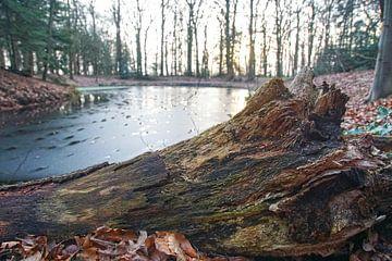 Resten een omgewaaide boom van Agnes Koning