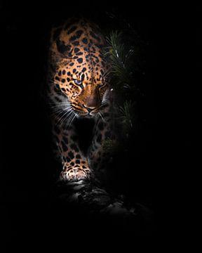La tête de la bête. Léopard isolé sur un fond noir. Un beau gros chat sauvage dans l'obscurité de la sur Michael Semenov