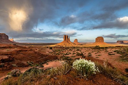 The view, Monument Valley