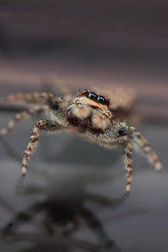 Nieuwsgierig klein spinnnetje van Roque Klop
