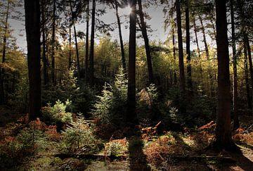 Wald mit Herbstfarben von MSP Canvas