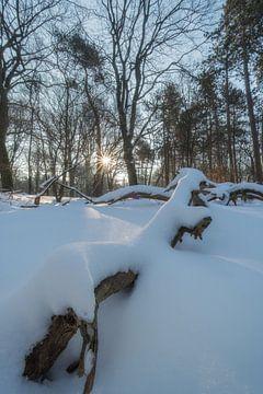Magisch winterlandschap van Moetwil en van Dijk - Fotografie