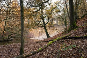 Herbstlandschaft mit schlängelndem Strom im Wald von Ger Beekes