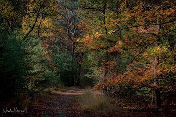 Herbstfarben in Limburg (2) von Nicole Harren