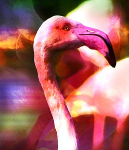 Flamed flamingo