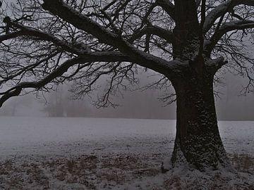 Paysage hivernal morne avec un vieux chêne dans la neige et le brouillard sur Timon Schneider