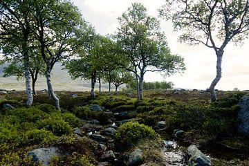 Landscape in Norway sur Gijs de Kruijf