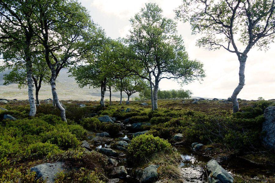 Landschap Noorwegen van Gijs de Kruijf