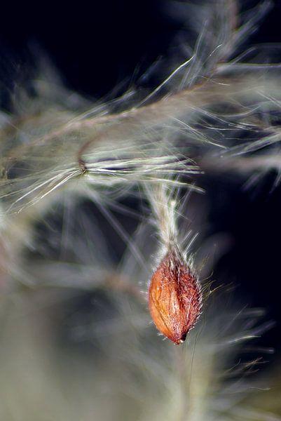 Flying seeds van Marlies Prieckaerts