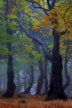 gespenstisch schöner Herbst von Daniela Beyer