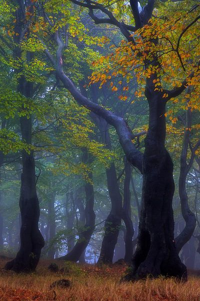 gespenstisch schöner Herbst van Daniela Beyer