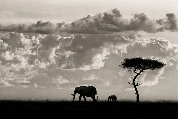 Silhouetten van Mara, Mario Moreno