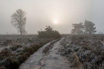 Versluierde zonsopkomst op de 'Noorderheide' von Jenco van Zalk