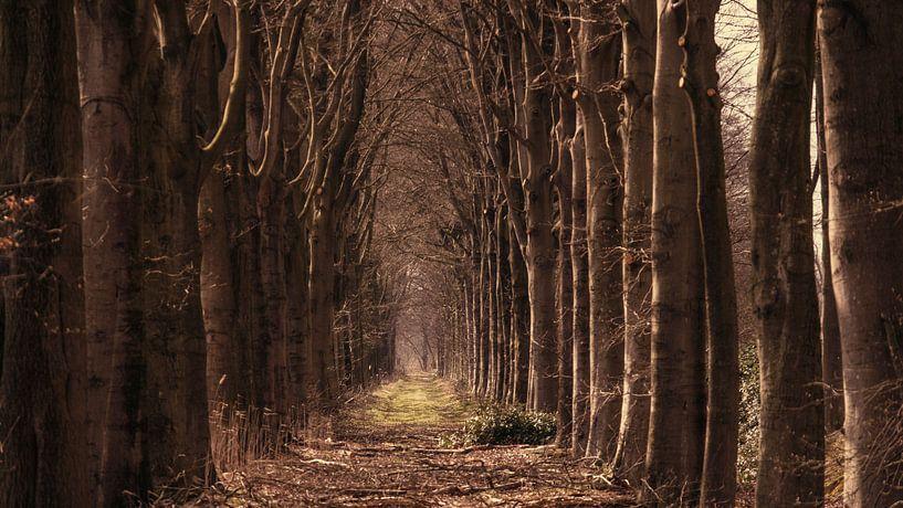 bomenlaan naar landgoed eikenhorst in esch van jan van de ven