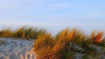 Ein milder Winter von Ostsee Bilder