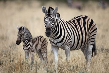 Barcode Zebra von Sybrand Treffers