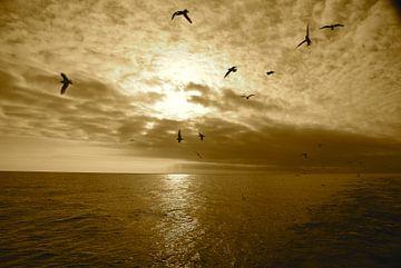 Meeuwen boven Noordzee von pepijn groenewegen