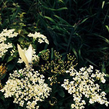 Vlinder op fluitekruit van Sjaak Smits
