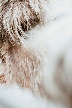 oog van een oud grijs bruin paard van Margriet Hulsker