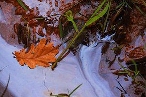 Herbstblatt im Brackwasser von Jolanda Kars