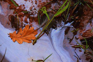Herfstblad in het brakke water van Jolanda Kars