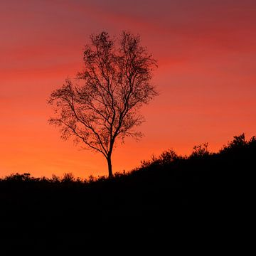 Berk zonsondergang Veluwe van Rick Kloekke