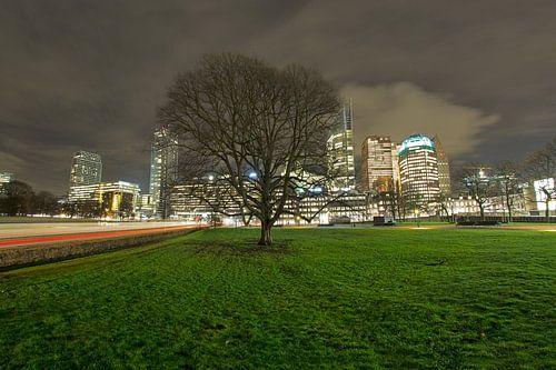Historische boom in Den Haag van