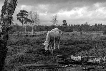 Hinter dem Baum von Tina Linssen